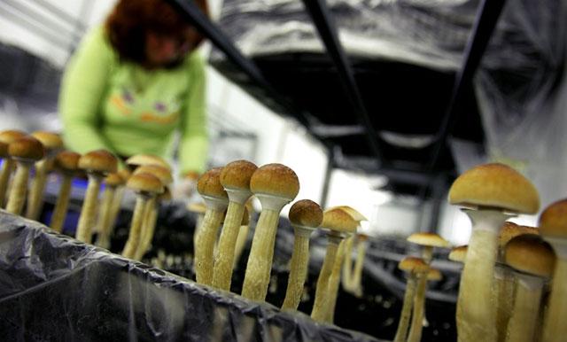 Бізнес ідея: Вирощування грибів