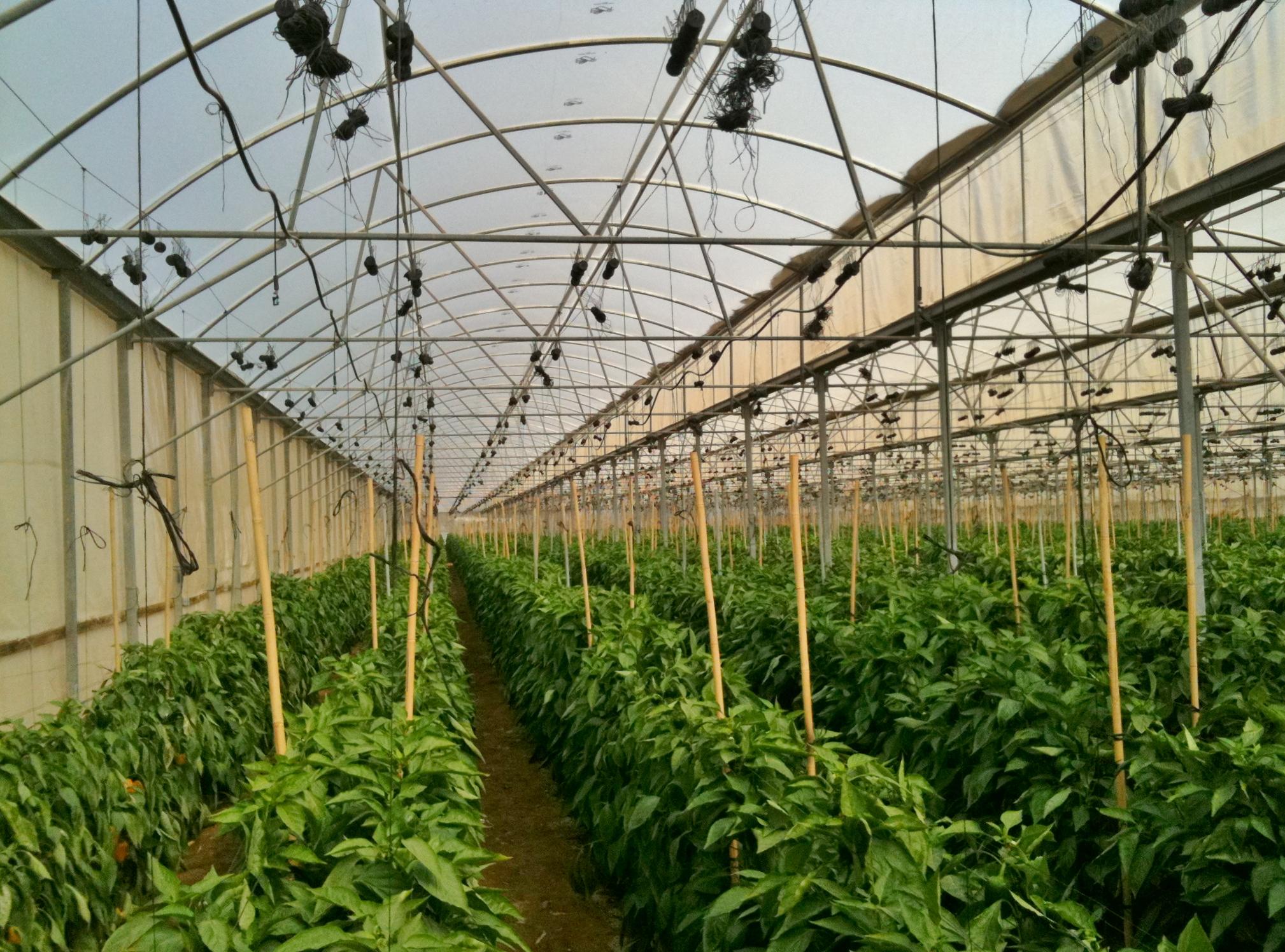Вирощування овочів як бізнес