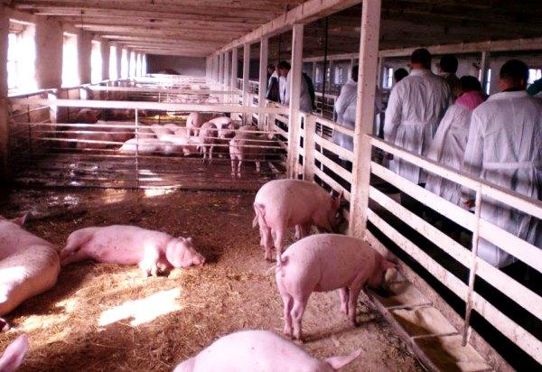 Перевірка санітарного стану ферми