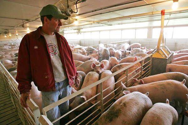 Персонал для свиноферми