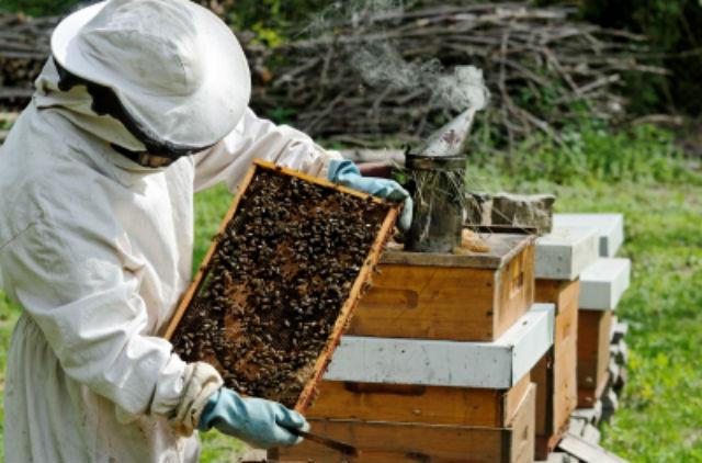 Бізнес-план бджільництва