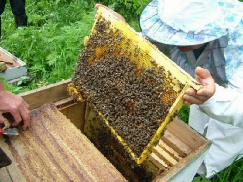Чи вигідно займатися бджільництвом?