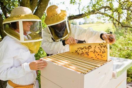 Технологія і особливості бджільництва