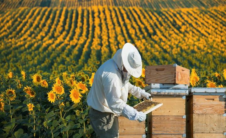 Як почати бізнес на бджільництві?