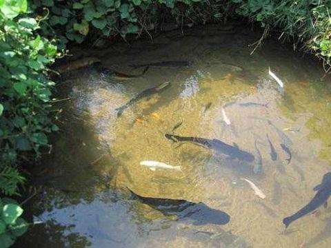 Як побудувати ставок для риби?