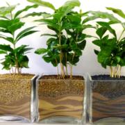Вирощування кімнатних рослин як бізнес