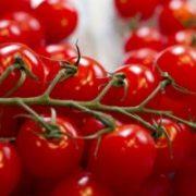 Як заробити на вирощуванні помідорів чері?